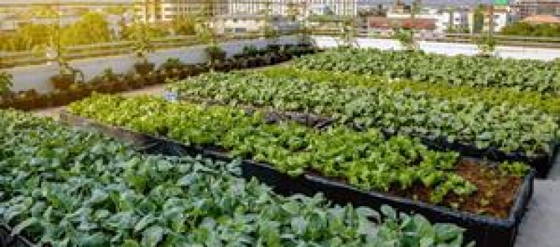 Seneca awarded $360,000 for applied research benefiting urban farmers